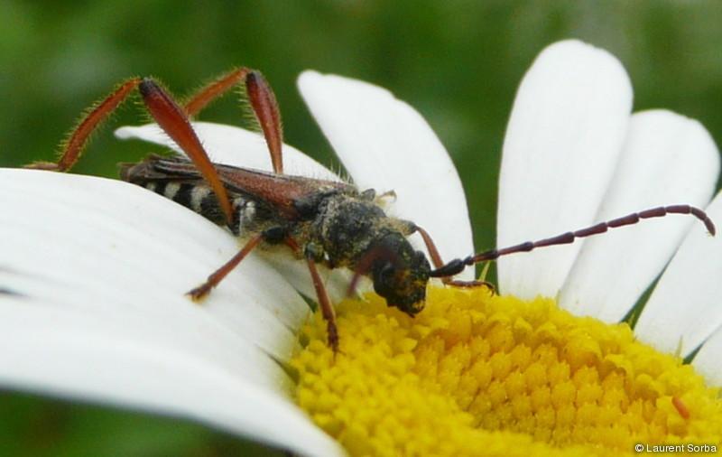 Abbreuvoir à nectar